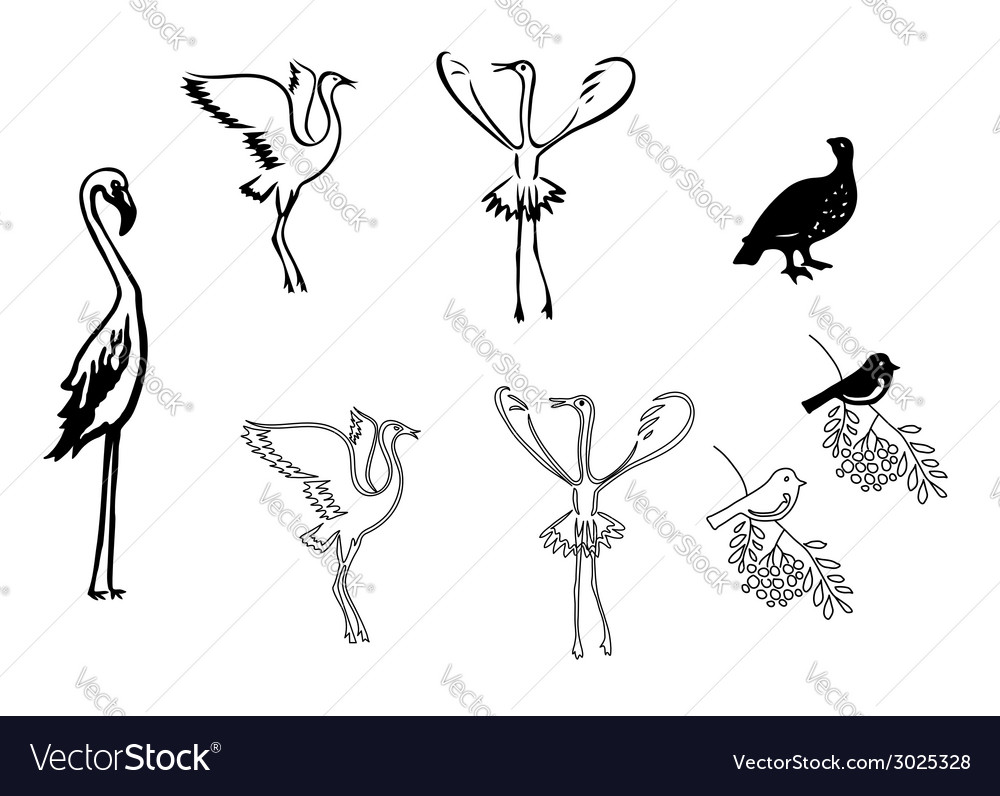 Silhouettes of birds  set vector