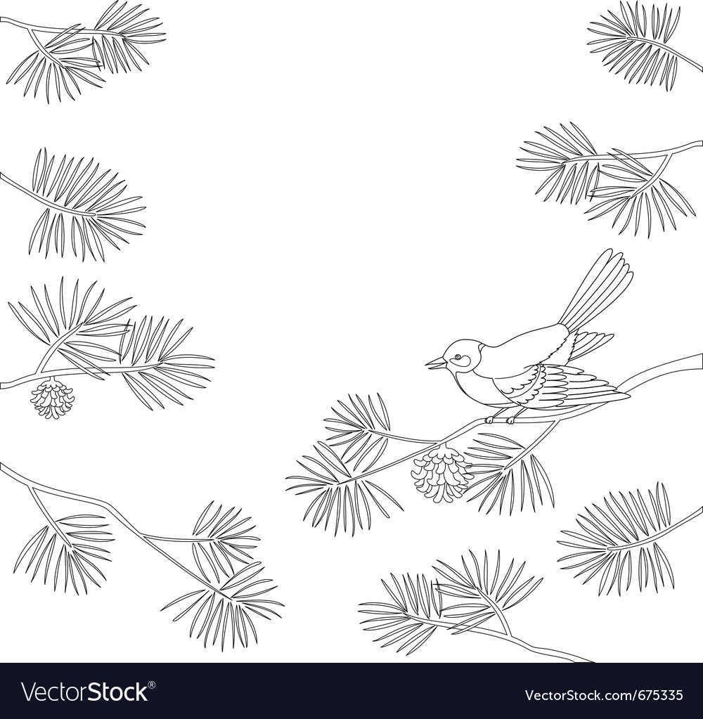 Titmouse on pine vector