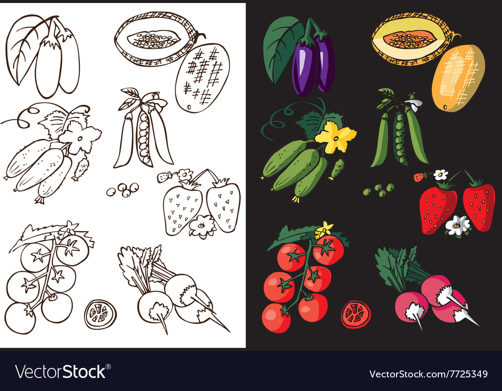 Vegetables berry and melon vector