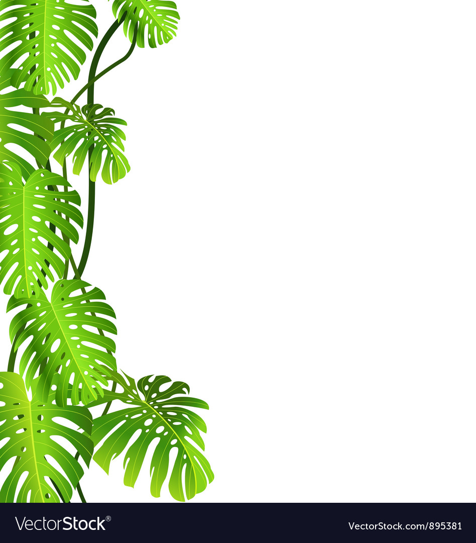 Tropical plant vector