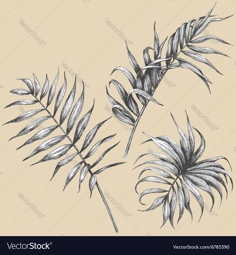 Palm leaves set vector