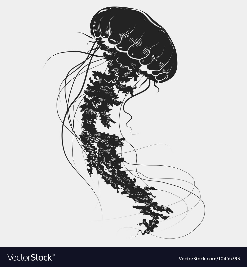 Hand drawn graphic jellyfish vector