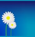 white daisy flower background vector image vector image