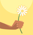 summer camomille in hand vector image