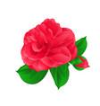 camellia japonica flower with bud vintage hand vector image