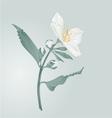Twig jasmine flower and buds vector image