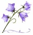 Violet Spring Flowers vector image