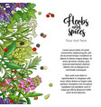 herbal card design with spices and herbs vector image