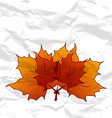 Autumnal maple leaves crumpled paper texture vector image vector image