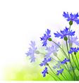 Cornflowers vector image