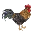 watercolor drawing cock vector image