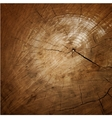 Wood texture Tree rings sawing wood vector image