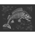 fish bone drawing vector image