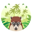 Coati on the Jungle Background vector image