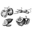 Vegetables isolated set etch style vector image
