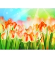 Beautiful colorful tulips in garden EPS 10 vector image