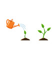 with phases plant growth vector image