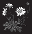 Hand drawn bouquet of chamomile flowers isolated vector image