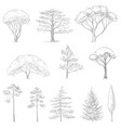 sketch of trees vector image