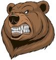 Ferocious bear vector image