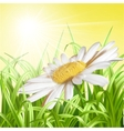 Green grass with daisy - summer background vector image