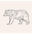 Sketch bear Hand drawn isolated Engraving doodle vector image