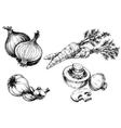 Vegetables collection hand drawn vintage style vector image vector image