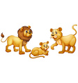 Lion family with cute little cub vector image