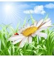 Ladybird on daisy flower vector image vector image