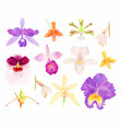 orchid watercolor set vector image