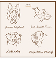 dog pets vector image