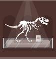 dinosaur skeleton in museum vector image