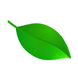 leaf icon in vector image