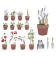 Flower pots with herbs and vegetables Gardening vector image