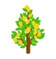 Dollar tree icon isometric 3d style vector image