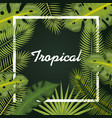 tropical leaves design vector image