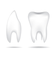 Teeth object vector image vector image