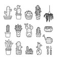 set of fancy cactus plants vector image