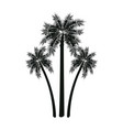 three palm tree tropical leaves trunk vector image vector image