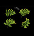 fern realistic set vector image