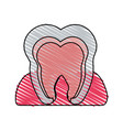 color crayon stripe cartoon internal tooth view vector image