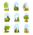 natural landscape with various trees set vector image
