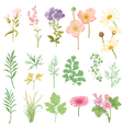 Set of Flowers and Herbs - hand drawn watercolor vector image vector image