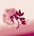 Peon flower vector image