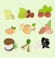 Nuts collection vector image