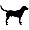 Labrador silhouette vector image vector image