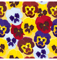 Background of pansies vector image