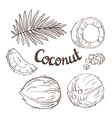 Coconut set - the whole nut leaves a coco segment vector image