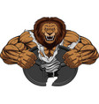 angry lion strong vector image