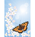 cherry blossoms and butterflies vector image vector image
